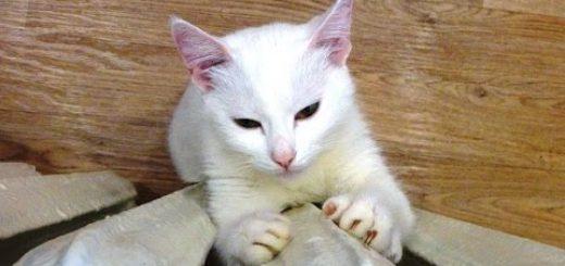 寒き日に猫は眠るよ縦伸びに、ラジエーターを抱き締めて