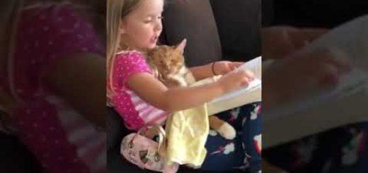 子どもの読書にお供する猫、聞き役に徹して大人の貫禄