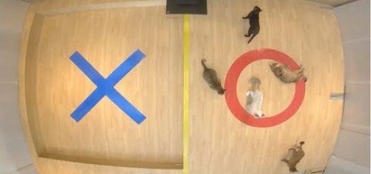 いそいそと猫が答える○×クイズ、床暖に誘われ全問正答