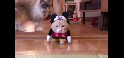ねずみ年あやかる猫のコスプレは、ツッコミづらいあの黒ネズミ