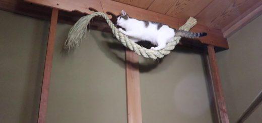 注連縄の上で魔除けのお仕事、猫は爪とぎ威勢を奮う