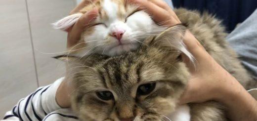 つきたてできたて猫鏡餅、とろけてもつれて揉めば揉むほど
