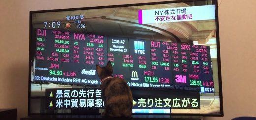 市場の動きが気になる猫、株価を追って右往左往
