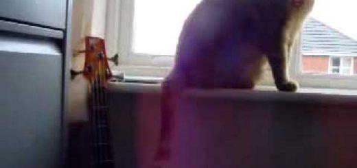 猫は奏でるシッポでスラップ、力強くも繊細に響く