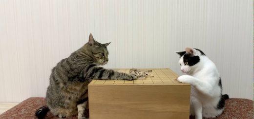 二匹の猫の将棋崩しの名人戦、ルール無用の清寂ファイト