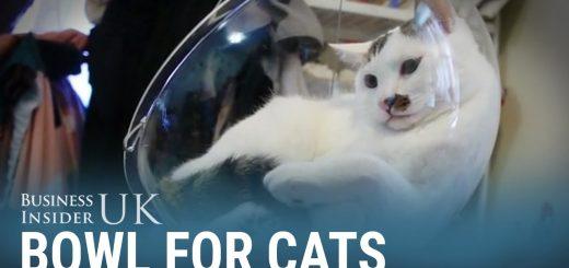 猫が喜ぶベッドにソファにブランコに、アクリルボウルをDIY
