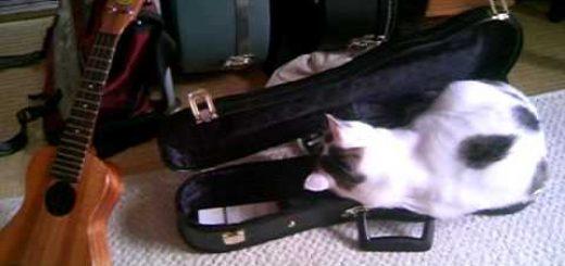 ウクレレのケースで例のチャレンジする猫、隠しきれないその存在感