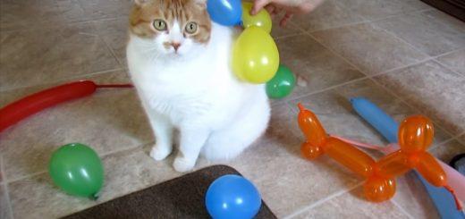 風船が付いては落ちるのんびり屋の猫、走り出したら皆落ちる