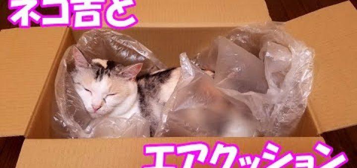 梱包用のエアクッションの猫オモチャ、疲れた猫を優しく包む