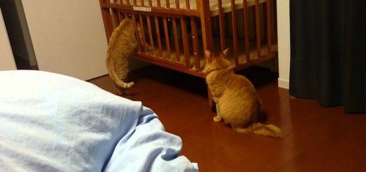 新入りのベビーベッドを検品する猫、深入りしすぎて抜けられず