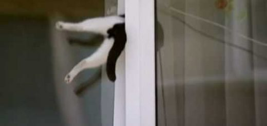内倒し窓に挟まり宙に浮く猫、通りすがりの人が救出