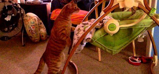しなやかな前脚のバネのサスペンション、猫は揺らすよ新入りを