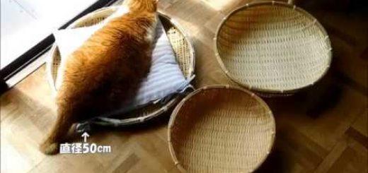 数百円の違いで快適度は歴然、猫が選ぶは大きめサイズ