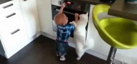 オーブンからそっと遠ざけ諭す猫、お前にはまだちょっと早いと