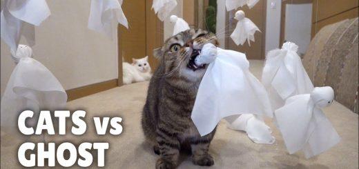 猫はやんちゃに容赦なく、てるてる坊主の明日を奪う