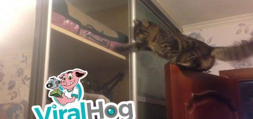 猫は飛ぶご家庭内のアスレチック、最後の最後で引き戸に阻まれ