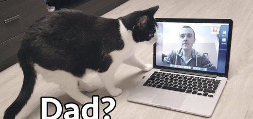 猫によるリモートワークの実践例、チャットで飼い主の息災確認