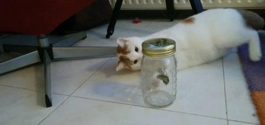 瓶の中で羽ばたく蝶々に熱狂歓喜、猫が集まる猫ホイホイに