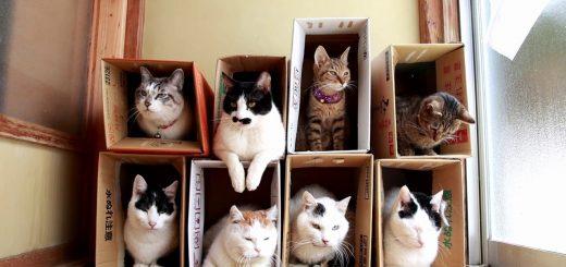 猫専用の新築マンション即日完売、段ボール作りの単身者向け