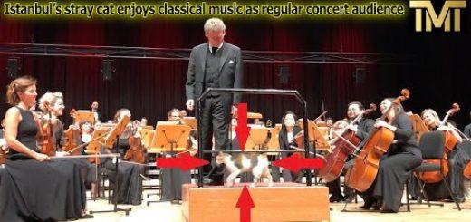 オーケストラの指揮台に跳び乗る三毛の猫、観客哄堂拍手喝采