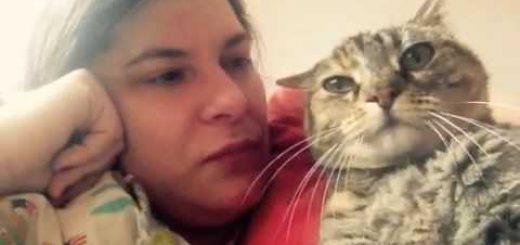 短き声で猫は答えるもう十分よと、ワンモアキス?の問いかけに