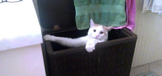 洗濯カゴの縁を伝って足を滑らせ、封鎖の憂き目にあう白猫