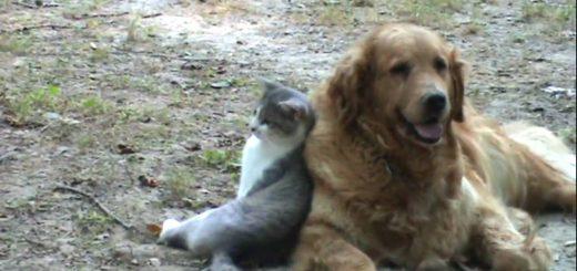 寄り添って犬に凭れる横座りの猫、刻むビートは相棒の鼓動