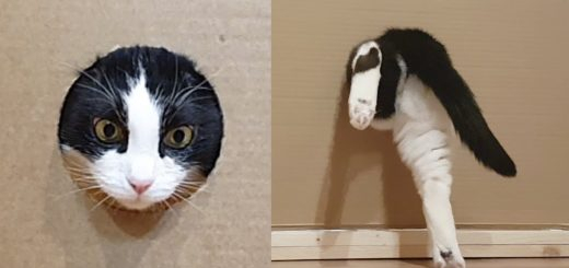 通過するたびに狭まる壁の穴、猫は挑むよ体を細めて
