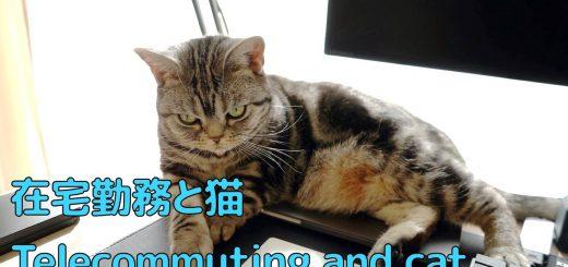 春先のリモートワークの脆弱性、猫がMacをホットマットと認識