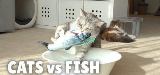 質感も動きもリアルな魚のオモチャ、猫も釣られて生き生きと