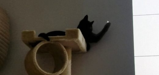 お仕事も猫の遊びもまとめてこなせる、ご自宅ワークソリューション
