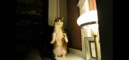 二足起立で猫は伸びるよ天を衝き、ロケットのようなストレッチ