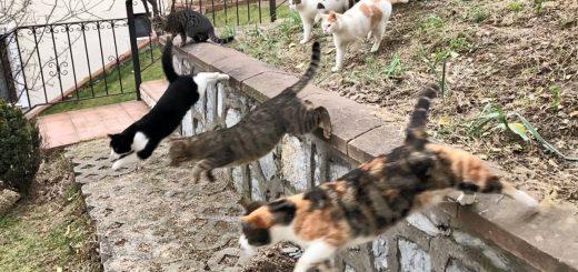 猫たちの息の揃ったパルクール、ポニョ腹の役割再確認