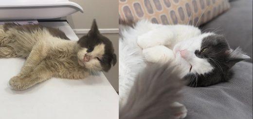 NYの路上の猫から飼い猫へ、片耳垂れ猫ビフォーアフター