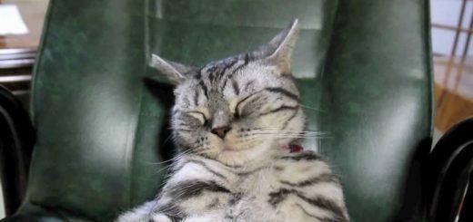 STAY HOME週間の清く正しい模範行動、座椅子に腰掛け夢を見る猫