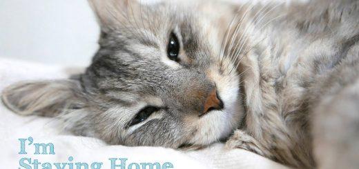 お出かけが大好きな猫のStay Home、画面に収まりきらぬかわいさ