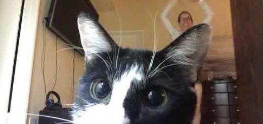 自宅での運動不足解消行動、カメラに向かって猫はダメ出し