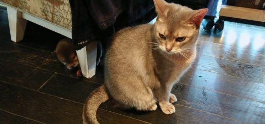 やんちゃなカワウソあやす猫、距離を保って遊びに興じる
