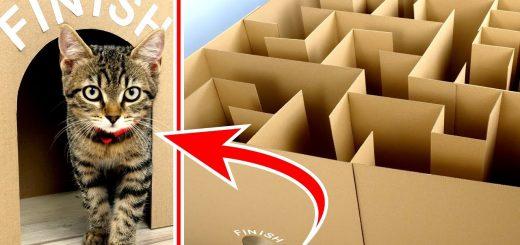 段ボールの屋内迷路に挑む猫、一筆書きで一発クリア
