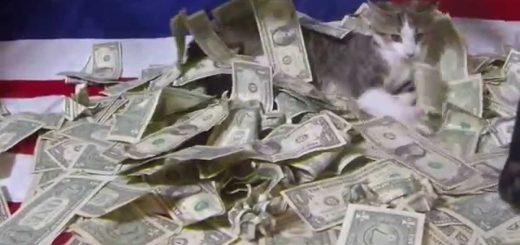 もし猫に例のお金が届いたら、狂気乱舞の大乱闘