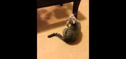 頭に付いたリボンを取ろうと踊る猫、奇妙なダンスに周囲は困惑