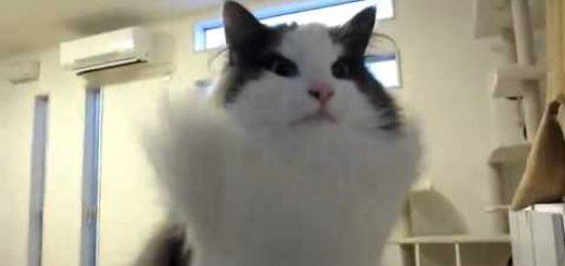全身の毛という毛をみな逆立てる猫、空気清浄機の上に立ち
