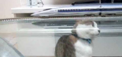 500系新幹線の隙を狙う猫、パンチで一撃脱線転覆
