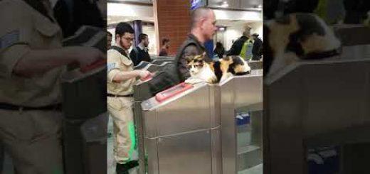 改札機の上から切符を確認する猫、機械に任せて現場猫化