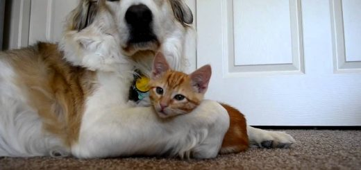 目の前のすべてが気になるお年頃、子猫は手を出す犬の舌にも