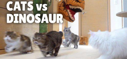 恐竜化した飼い主におののいた猫、すぐに見破り歯牙にも掛けず