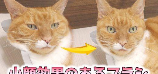 ブラッシングで猫は小顔にシャープな顔に、ビフォーアフターの落差は必見