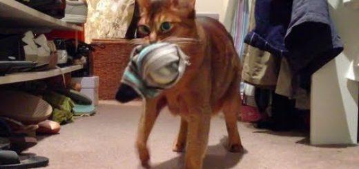 カメラは見つめた猫のドヤ顔、靴下が消える謎に迫る