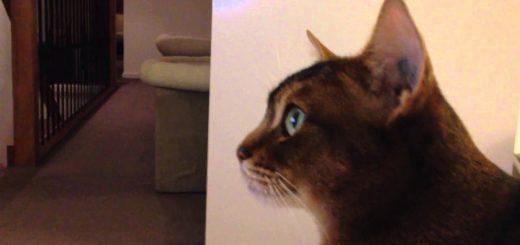 自らの犯行映像見つめる猫、目を見開いて完全黙秘