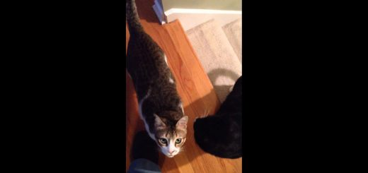 2か月ぶりに帰宅の飼い主を見た猫たち、顔を見合わせ一瞬怪しむ
